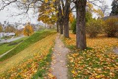 Jesieni drzewa w parku Zdjęcia Royalty Free