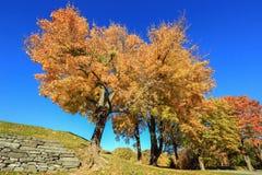 Jesieni drzewa w parku Obraz Stock