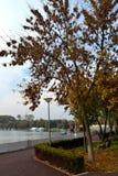 Jesieni drzewa w parku fotografia royalty free