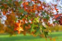 Jesieni drzewa w Versailles parku i liście Fotografia Royalty Free