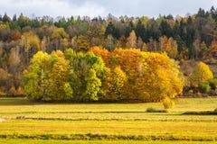 Jesieni drzewa warstwy Zdjęcie Royalty Free