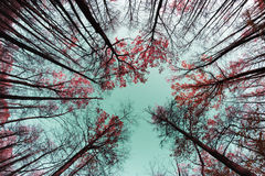 Jesieni drzewa wierzchołki Obraz Stock