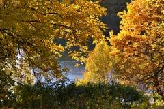 Jesieni drzewa, woda, jezioro, liście, kolor żółty, zieleń zdjęcie royalty free