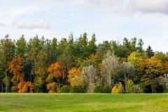 Jesieni drzewa z koloru żółtego i pomarańcze liśćmi obrazy royalty free