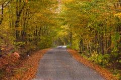 Jesieni drzewa zakrywający z jesień liśćmi Obrazy Royalty Free