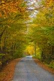 Jesieni drzewa zakrywający z jesień liśćmi Zdjęcie Royalty Free