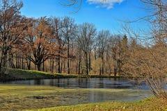 Jesieni drzewa zbliżają jezioro Zdjęcie Stock