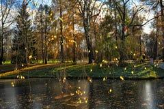 Jesieni drzewa zbliżają rzekę Obrazy Stock