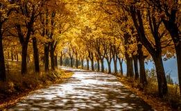 Jesieni drzewa zbliżają drogę Zdjęcie Royalty Free