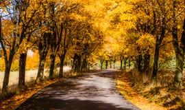 Jesieni drzewa zbliżają drogę Obrazy Royalty Free