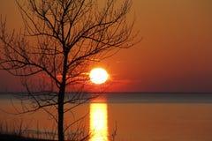 Jesieni Drzewny Sylwetkowy Jeziornym Huron zmierzchem Obraz Royalty Free