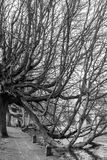 Jesieni drzewny zrozumienie w wodzie Obrazy Stock