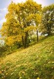 jesienią drzewo Zdjęcie Royalty Free