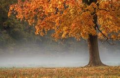 Jesieni drzewo. obraz royalty free