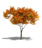jesienią drzewo Fotografia Royalty Free