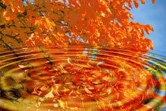jesienią drzewo zdjęcia stock