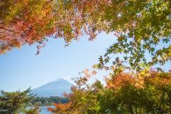 Jesieni drzewo Fuji i góra Zdjęcia Royalty Free