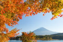 Jesieni drzewo Fuji i góra Zdjęcie Royalty Free