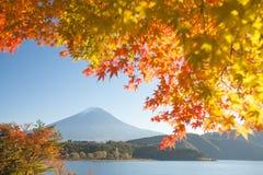 Jesieni drzewo Fuji i góra Obrazy Stock