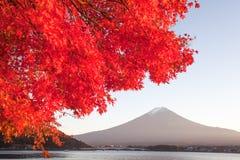 Jesieni drzewo Fuji i góra Fotografia Stock
