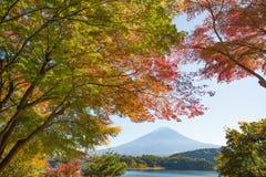 Jesieni drzewo Fuji i góra Obraz Royalty Free