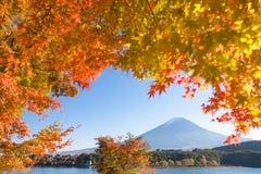 Jesieni drzewo Fuji i góra Fotografia Royalty Free