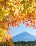 Jesieni drzewo Fuji i góra Zdjęcia Stock