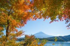Jesieni drzewo Fuji przy jeziornym kawaguchiko i góra Zdjęcie Royalty Free