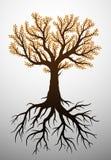 Jesieni drzewo i swój korzenie ilustracja wektor