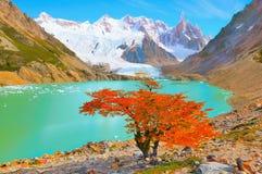 Jesieni drzewo jeziorem blisko Cerro Torre góry Obrazy Stock