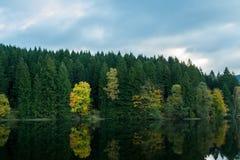 Jesieni drzewo na wybrzeżu jezioro Fotografia Stock