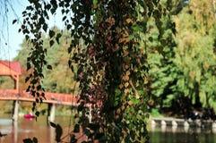 Jesieni drzewo nad rzeka fotografia stock