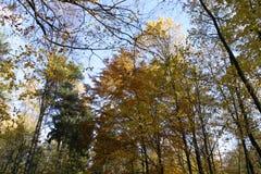 Jesieni drzewo nakrywa 07 fotografia royalty free