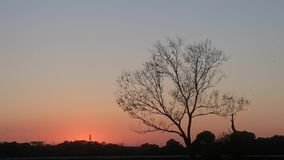 Jesieni drzewo podczas zmierzchu Obraz Royalty Free