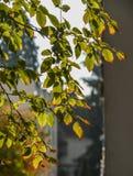 Jesieni drzewo przy parkiem zdjęcie stock