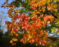 Jesieni drzewo przy parkiem fotografia stock