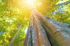 Jesieni drzewo w lasowym odgórnym widoku spod spodu Fotografia Stock
