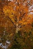 Jesieni drzewo w Luksemburg obraz stock