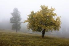 Jesieni drzewo w mgle. Zdjęcie Royalty Free