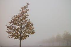Jesieni drzewo w mgle Zdjęcie Stock