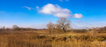 Jesieni drzewo w polu zdjęcia royalty free