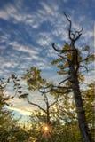 Jesieni drzewo w wschodzie słońca Obraz Stock
