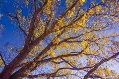 Jesieni drzewo z niebieskim niebem Obrazy Royalty Free