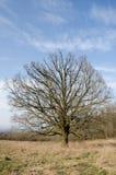 Jesieni drzewo z niebieskim niebem Zdjęcia Stock
