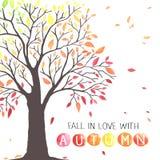Jesieni drzewo z spada puszków liśćmi Fotografia Stock