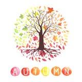 Jesieni drzewo z spada puszków liśćmi Obraz Stock
