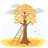Jesieni drzewo z yellowed schodkami i liśćmi Zdjęcia Royalty Free