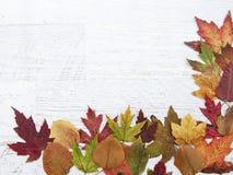 Jesieni dziękczynienia tło Zdjęcie Royalty Free