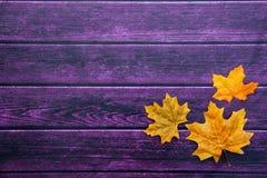 Jesieni dziękczynienia tło Obraz Royalty Free