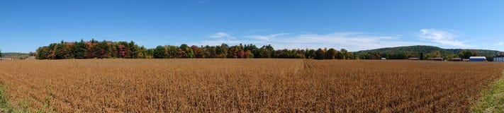 Jesieni fasoli pola panorama Obraz Royalty Free